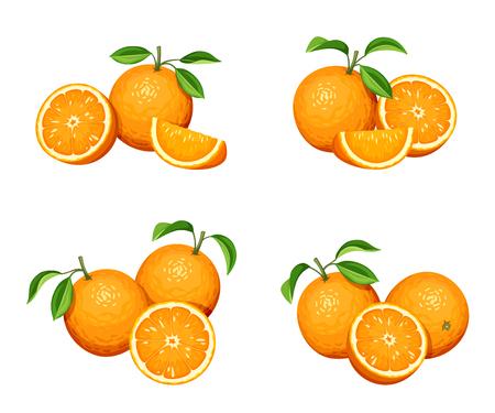 Vector set of orange fruit isolated on a white background.