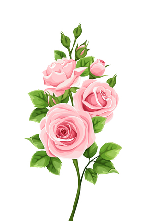 Vector branch of pink roses isolated on a white background.