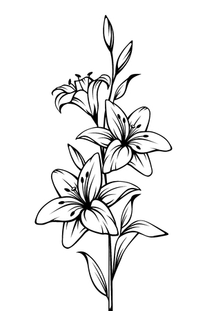 Vector black and white contour drawing of lily flowers.