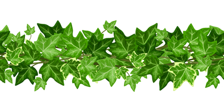 Vector horizontal seamless garland with green ivy leaves on a white background.  イラスト・ベクター素材