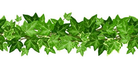 Wektor poziomy girlanda bez szwu z zielonych liści bluszczu na białym tle. Ilustracje wektorowe