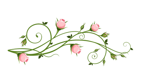 Vector decorative design element with pink rosebuds isolated on a white background.