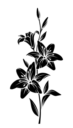 Vector black silhouette of lily flowers.
