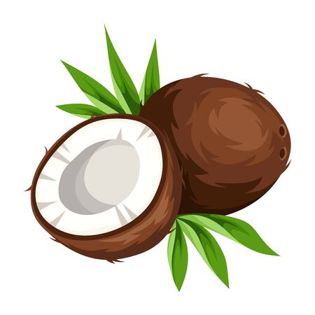 Vector coconut isolated on a white background.