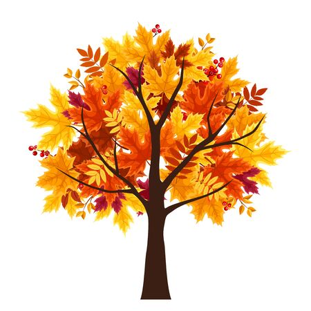 Vector abstract autumn tree isolated on a white background. Stock Illustratie