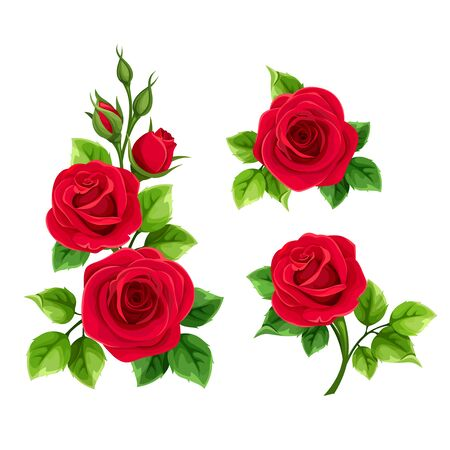 Vector set of red roses isolated on a white background. Illustration