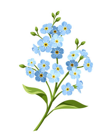 Vector blue forget-me-not flowers isolated on a white background.