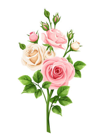Pink and white roses isolated on a white