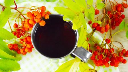 Twigs berries of mountain ash. Фото со стока