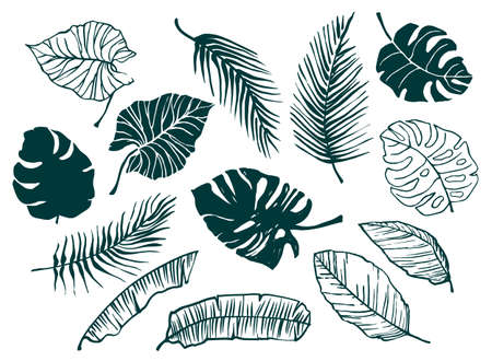 Vector set of hand-drawn tropical leaves. Trendy design