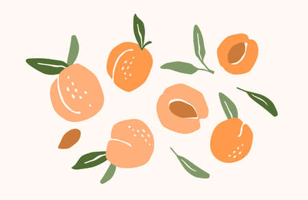 Set of drawn apricots. Vector illustration. Isolated elements