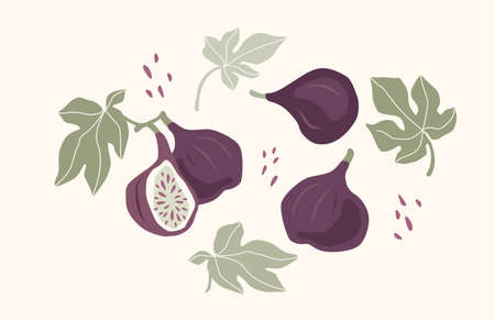 Set of drawn figs, Vector illustration. Isolated elements.