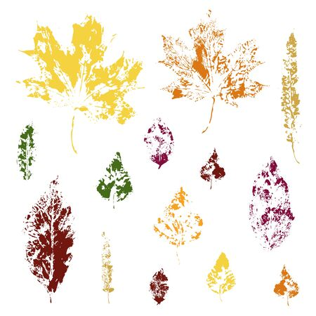 set of maple and birch leaf prints in color Vettoriali
