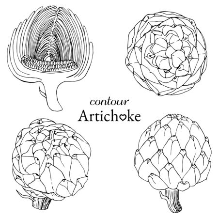 set of artichoke contours from different angles Vettoriali