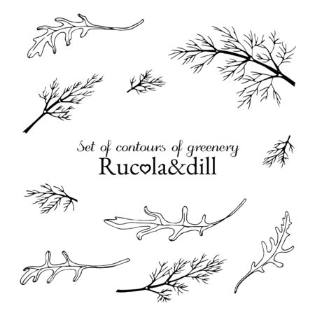 set of contours of greenery rucola and dill