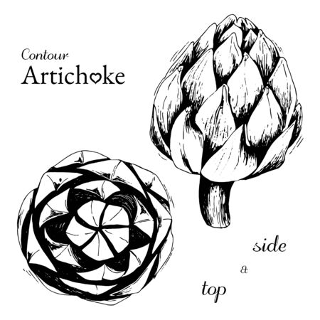 Contour isolated on white artichoke top and side view in graphics