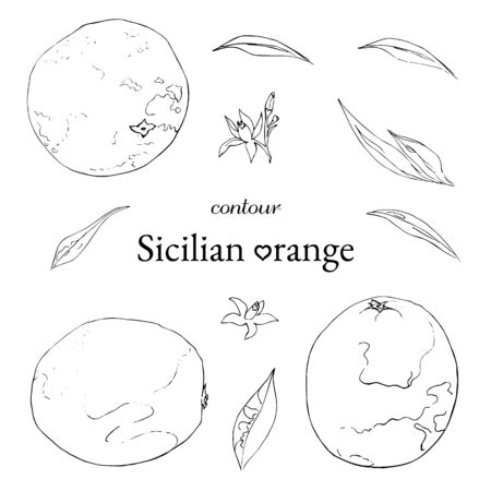 set of contour sicilian orange, flowers and leaves