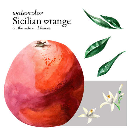 Watercolor Sicilian spotting orange on the side, flowers and leaves