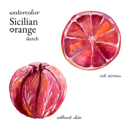 Watercolor Sicilian orange sketch without skin and cut