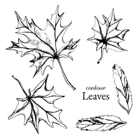 Collection of leaves maple and rowan in graphic style Vettoriali