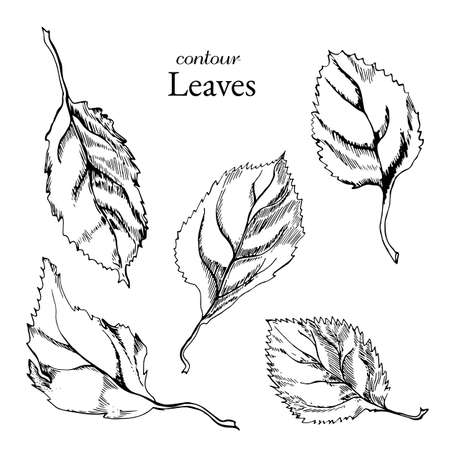 Contour collection of leaves in graphic style