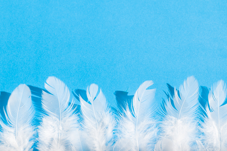 White feathers on a blue background. View from above 版權商用圖片