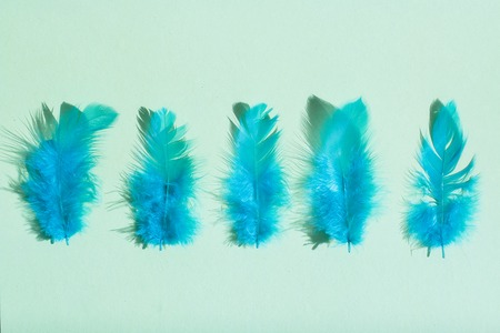 Bright blue feathers close-up on a light green background. View from above