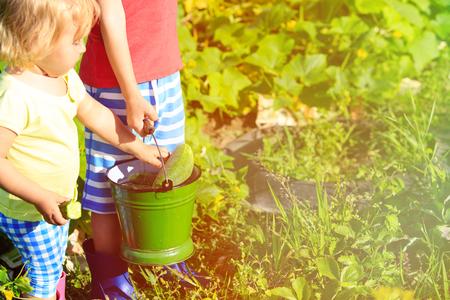 granja: los ni�os que cosechan los pepinos en el jard�n, los ni�os actividades de jard�n