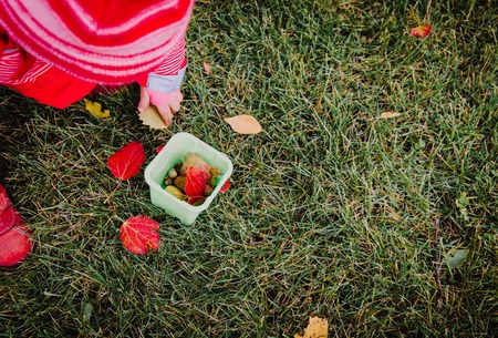 little girl collecting autumn leaves and acorns Stock Photo