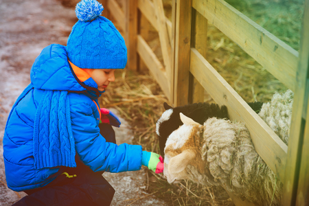 little boy feeding goat at farm Stock Photo