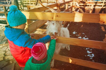 little boy and girl feeding goat at farm Stock Photo