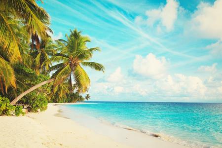 ヤシの木のある熱帯砂浜 写真素材