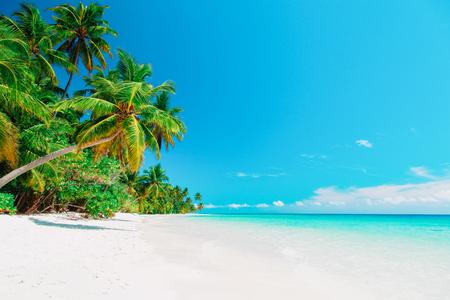 Tropischer Sandstrand mit Palmen Standard-Bild - 93625234