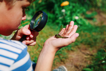 kids learning - little boy exploring dragonfly with magnifying glass Stock Photo