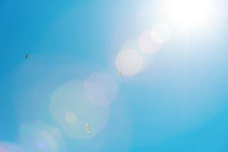 Seagulls flying in the blue sky with the sun flare Stock Photo - 101143744