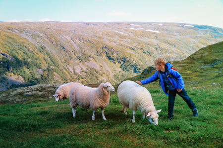 little boy and sheeps in mountains, kids travel learn animals Stock Photo