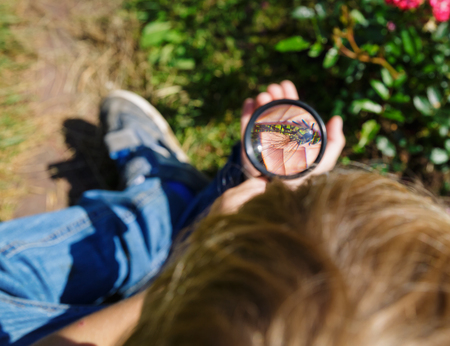 Kids learning - little boy exploring dragonfly with magnifying glass Imagens
