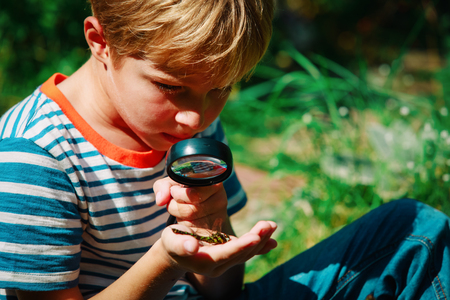 kids learning - child exploring dragonfly with magnifying glass Stock Photo
