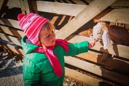 little girl feeding sheeps at farm, kids learn animals