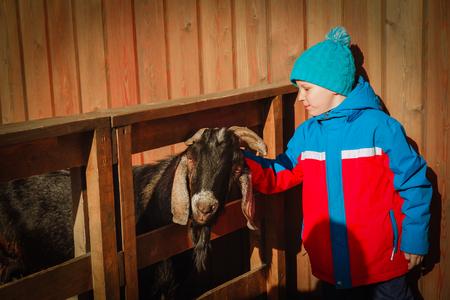 little boy feeding sheeps at farm, kids learn animals Banco de Imagens