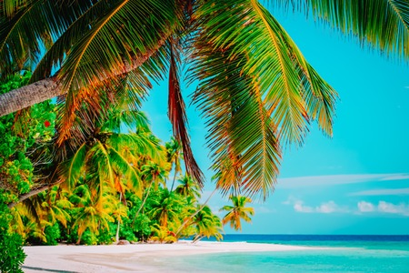 tropical sand beach with palm trees, vacation Imagens