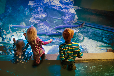 kids watching fishes in aquarium, learning marine life 免版税图像