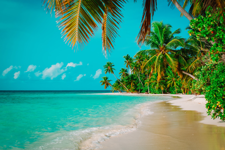 tropical sand beach with palm trees, vacation Banco de Imagens