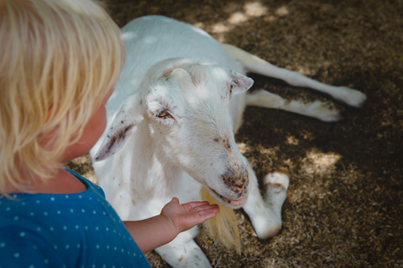little girl touching goat at farm, kids learn animals