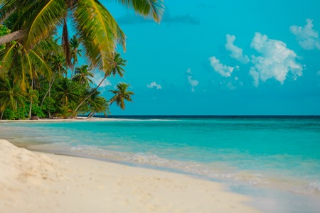 tropical sand beach with palm trees, vacation at sea