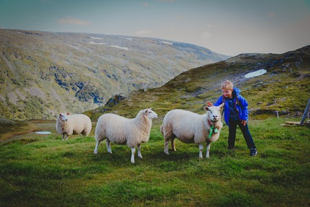 cute boy and sheeps in mountains, kids travel learn animals