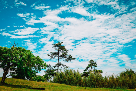 beautiful nature of Mauritius, tropical trees on sky Stock Photo