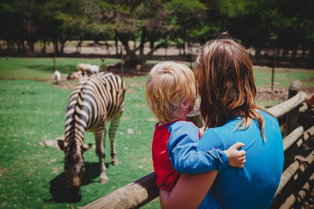 mother and little son looking at zebra