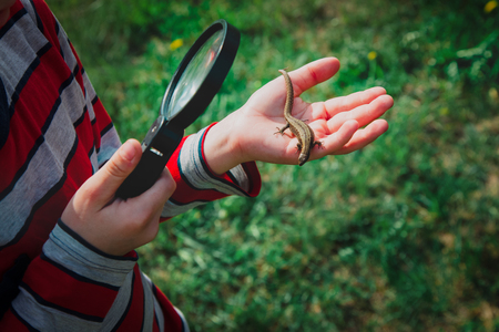 kids learning - child exploring lizard with magnifying glass