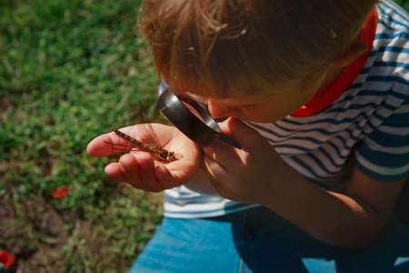 kids learning - child exploring dragonfly with magnifying glass Stok Fotoğraf